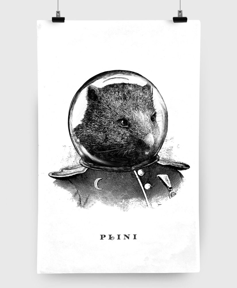 Plini - Wombat - Limited Edition 11x17 Print
